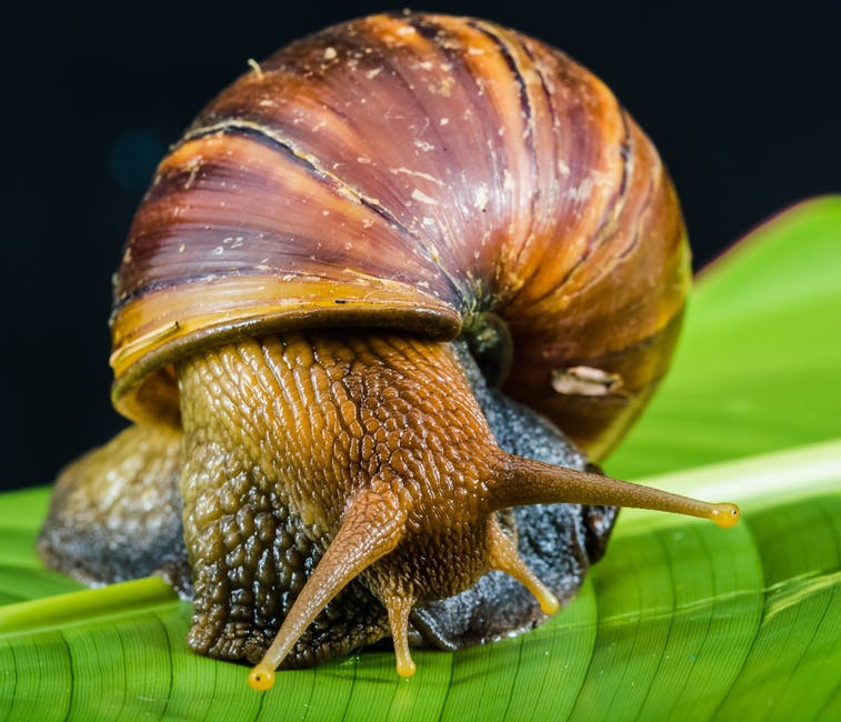 food do family pet snails eat?